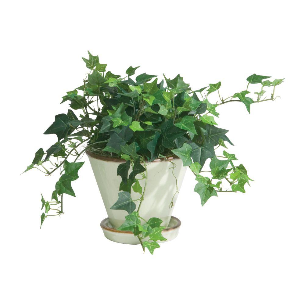 ivy-pot